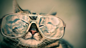 A smug cat with glasses likes the website overhaul